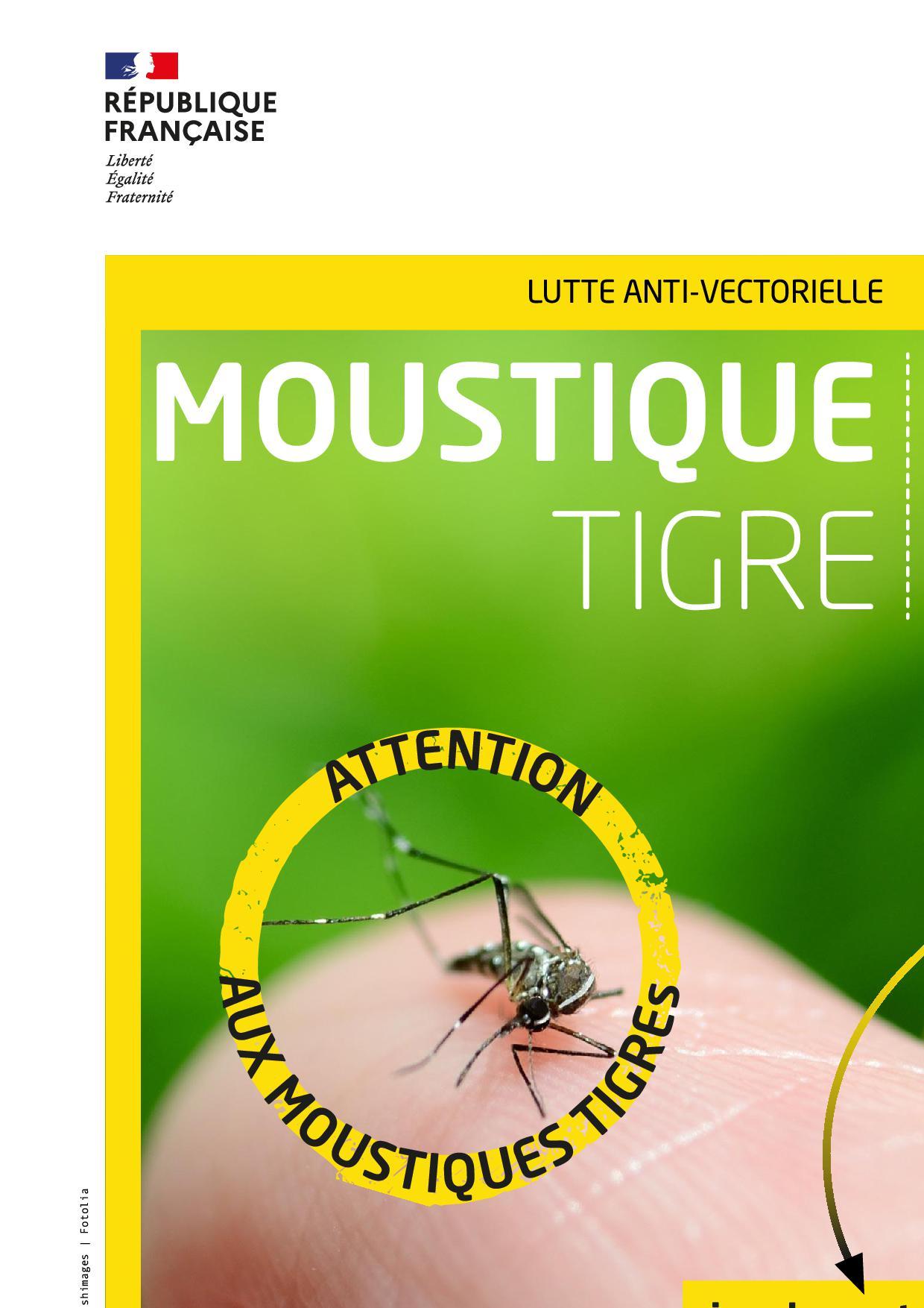 MoustiqueTigre_Signalement.jpg